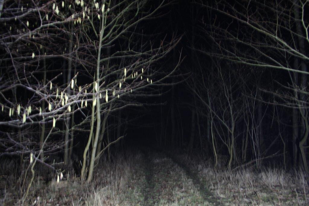 LED alene